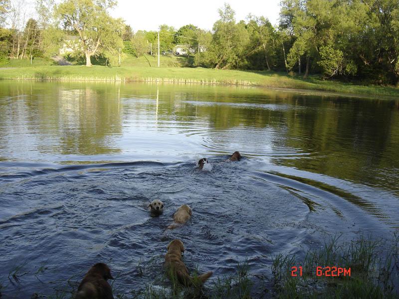 Pond playin'