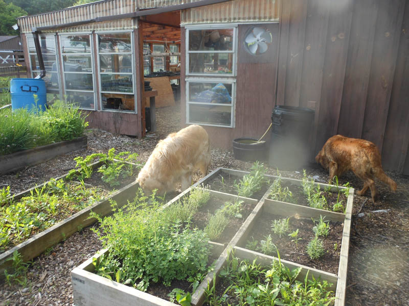 Herb Garden patrol