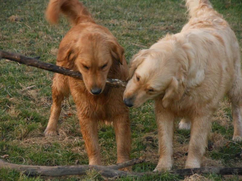 Stick chewin'